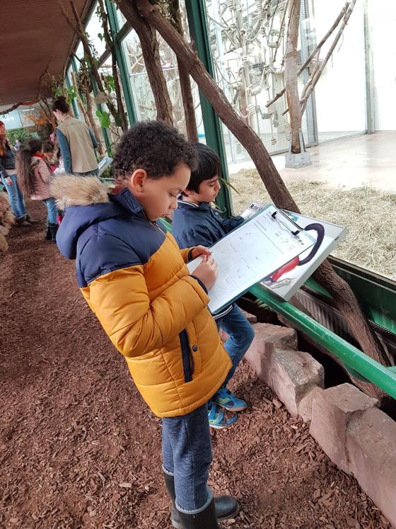 Zoo_Lemuren-02